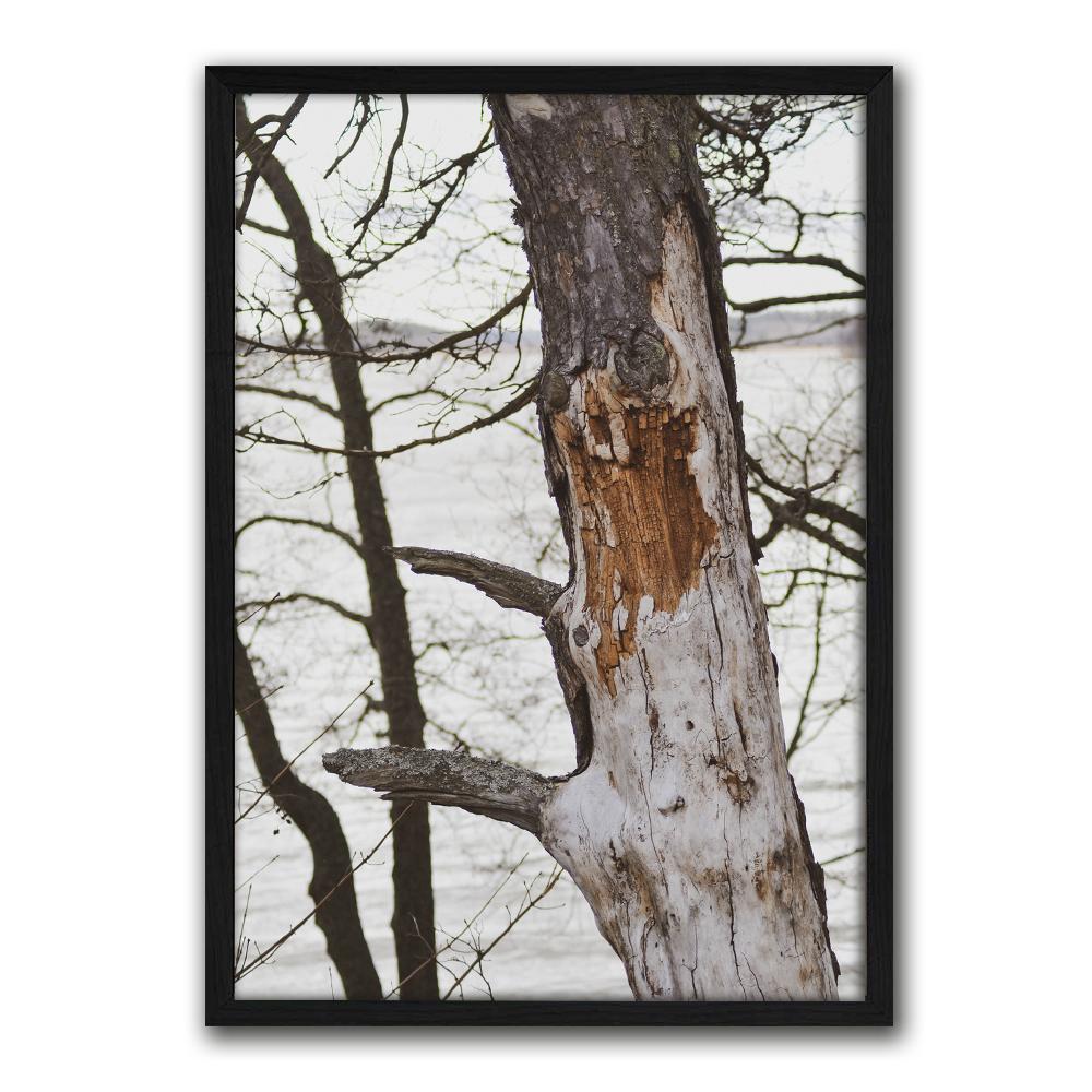 Luontojulisteet valokuvajulisteet vanha puu-3