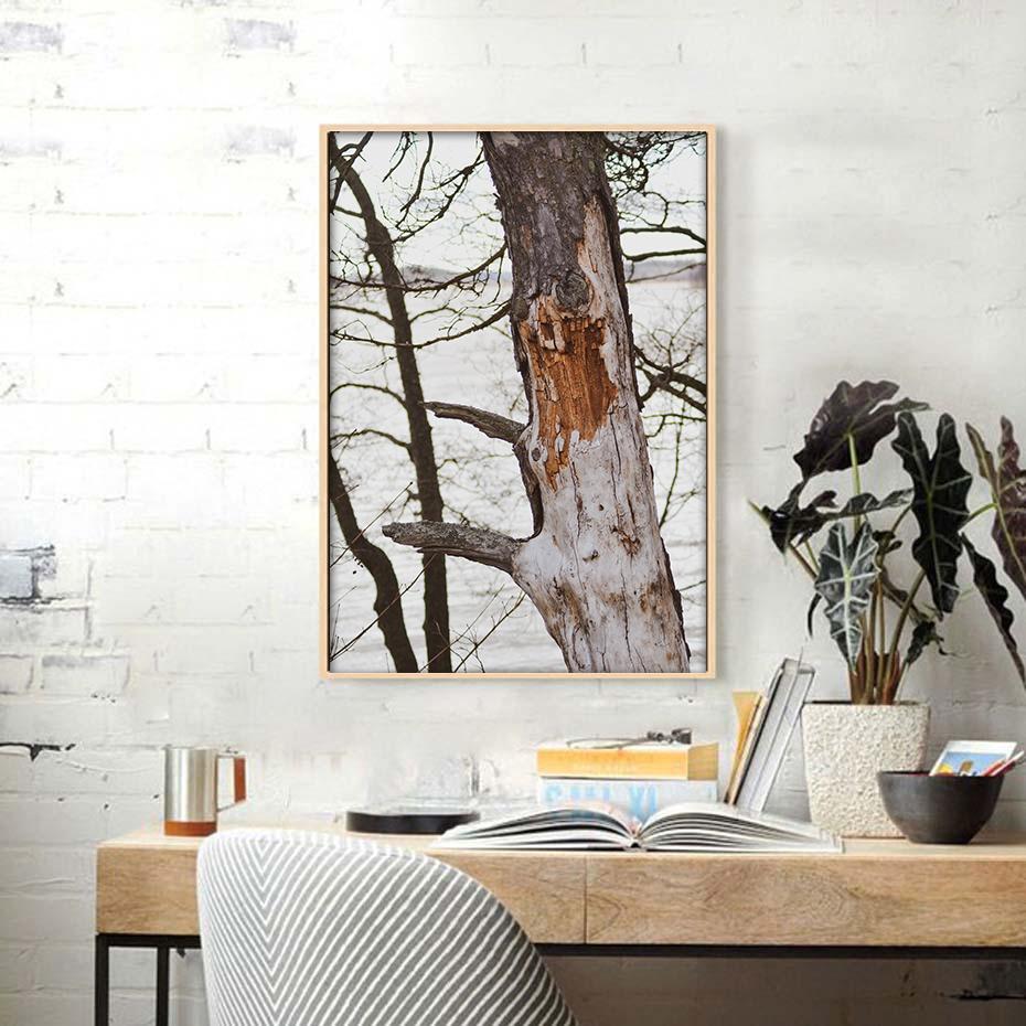 Luontojulisteet valokuvajulisteet vanha puu-4